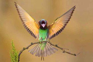 HAVENS_Bird_Lemur_Combo